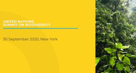 United Nations Summit on Biodiversity 2020